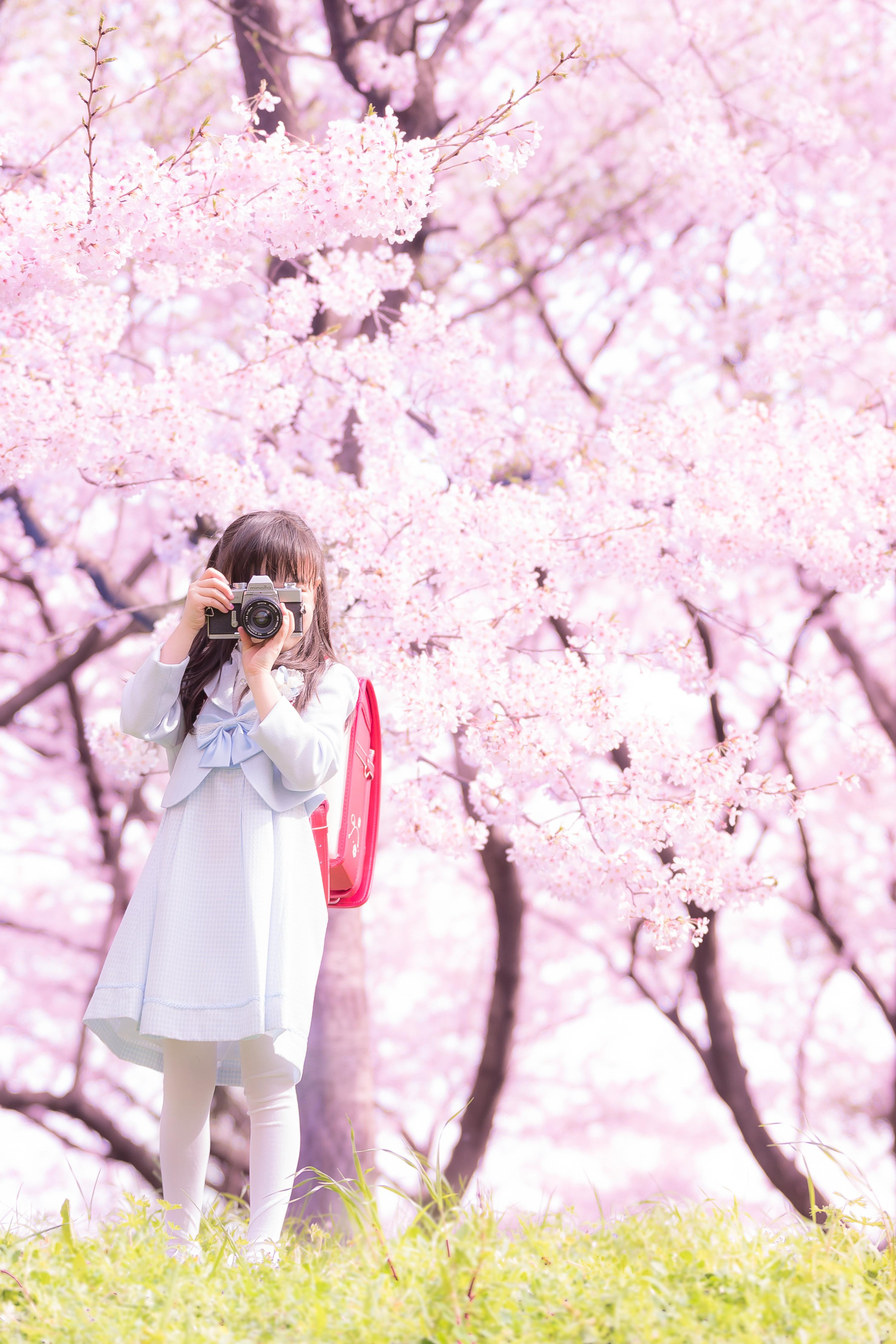 フォトコンテスト「桜」2016特別賞