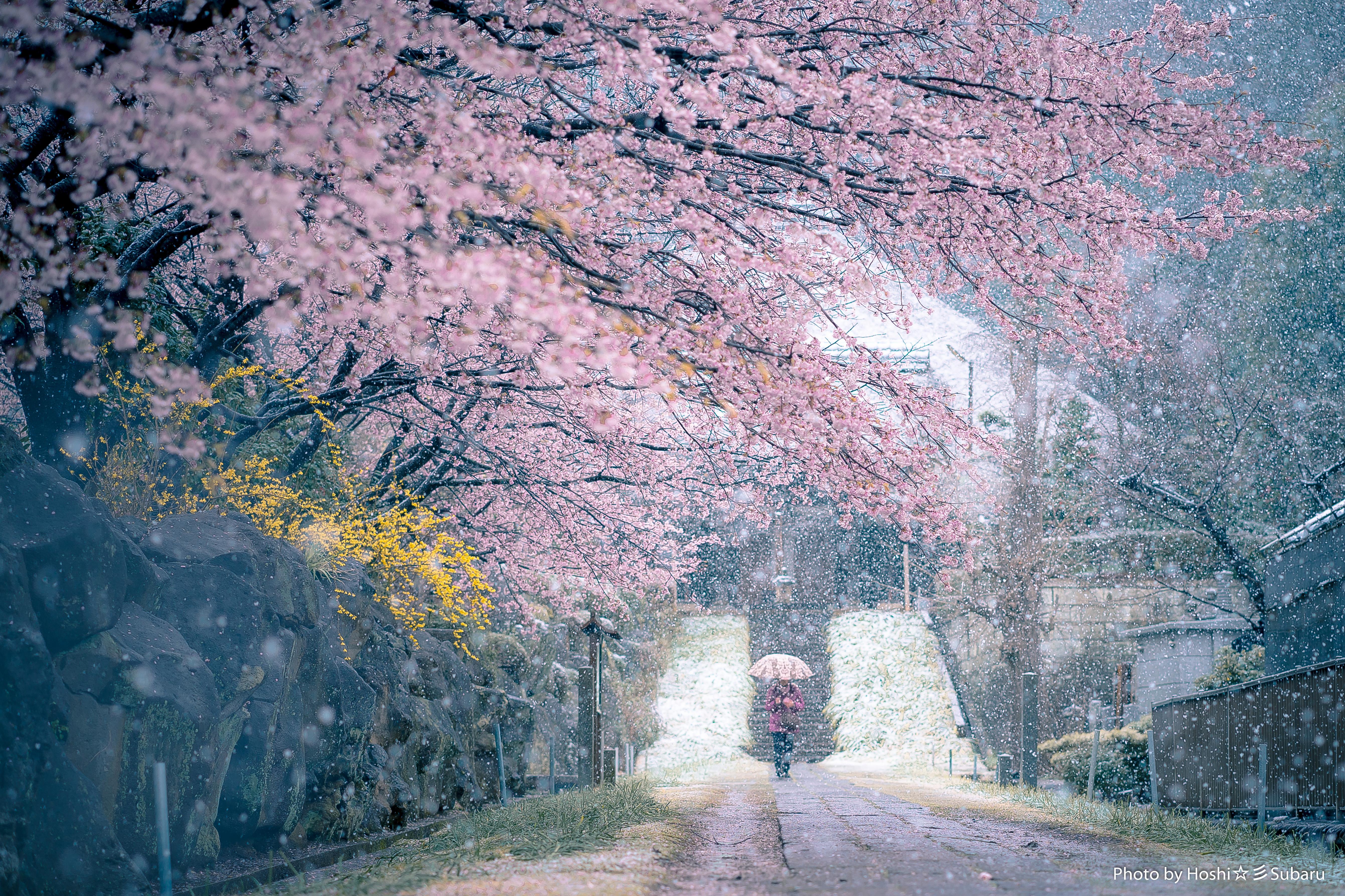 フォトコンテスト「桜」2018彩時記賞