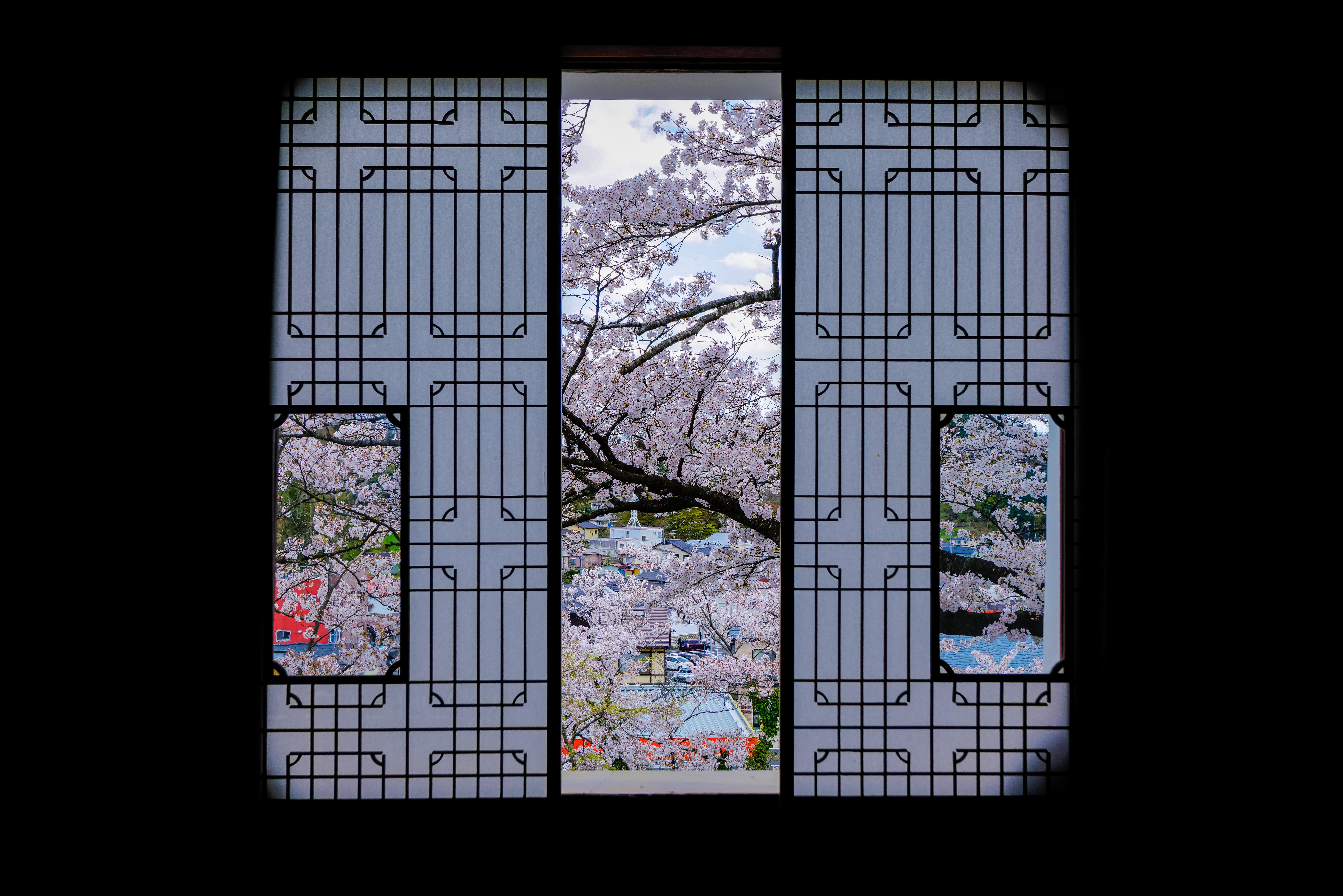 フォトコンテスト「桜」2017審査員賞