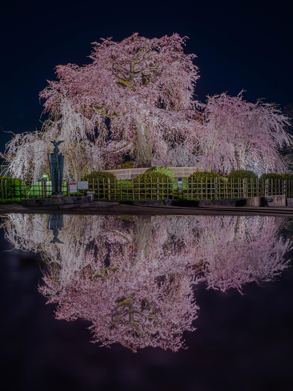 フォトコンテスト「桜」2020特別賞