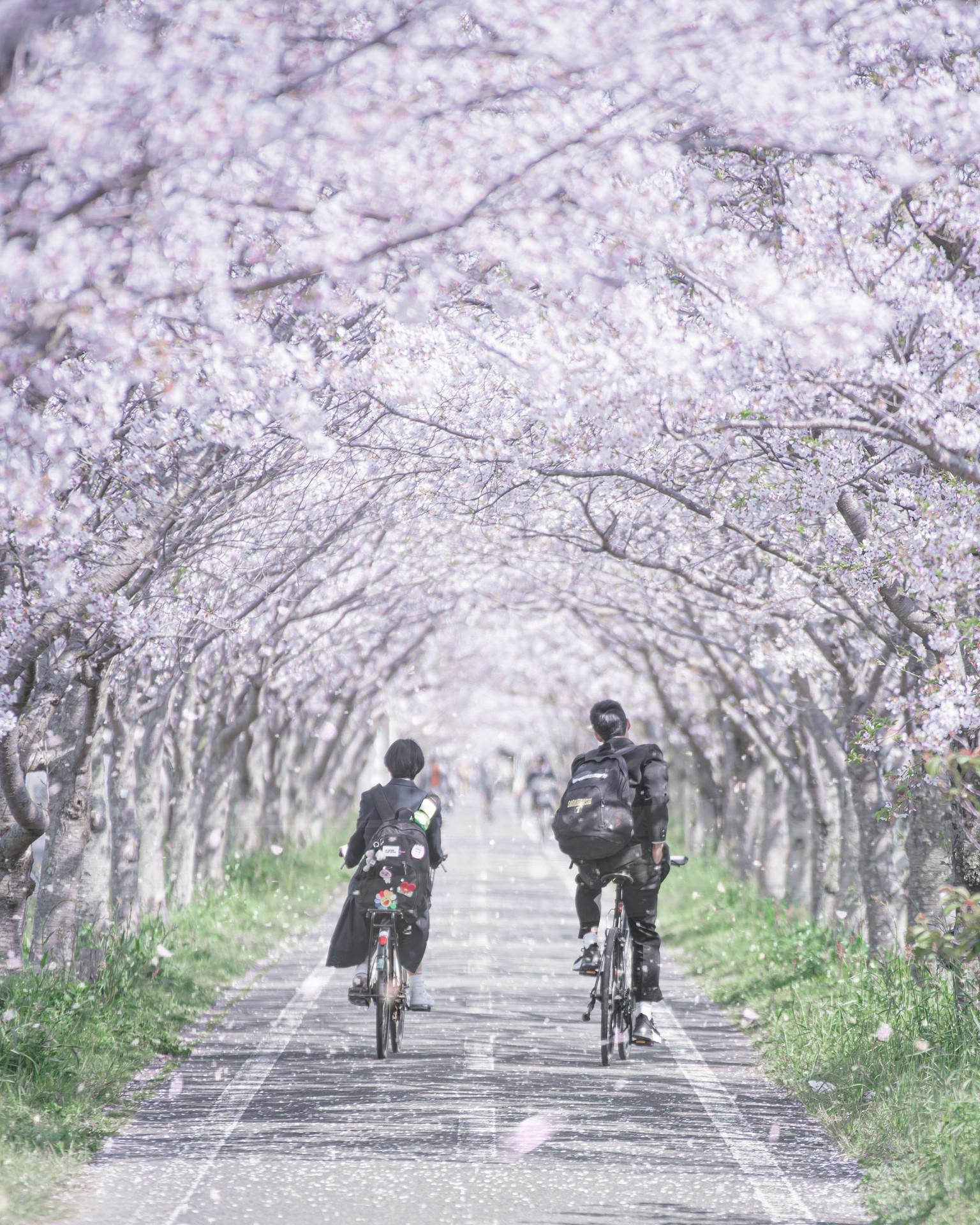 フォトコンテスト「桜」2021特別賞
