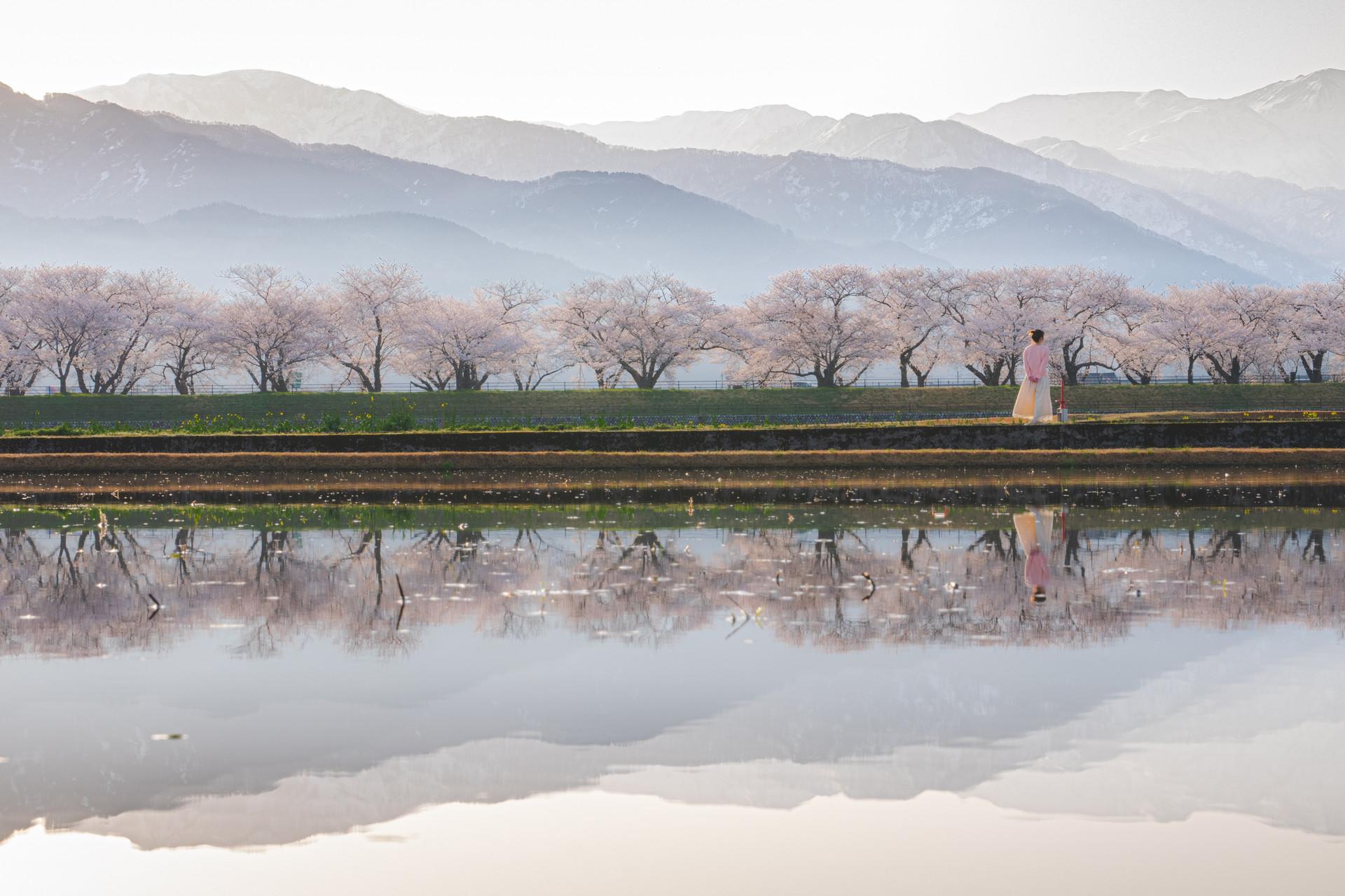 フォトコンテスト「桜」2021審査員賞