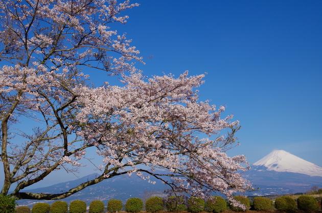 静岡県三島市 山中城跡