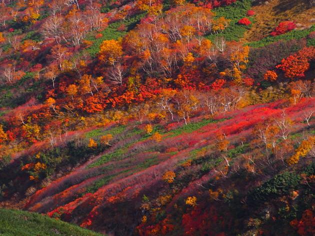 大雪山系比布岳の山裾(愛別岳から撮影)