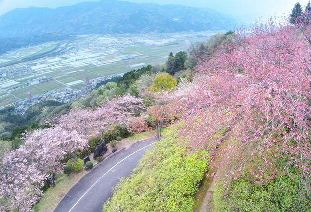 愛媛県大洲市富士山公園
