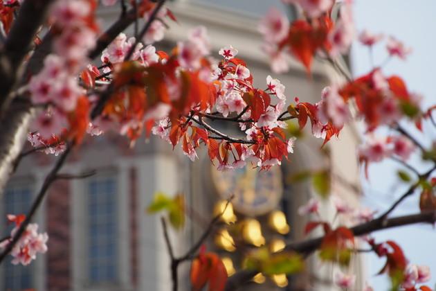 小樽市堺町メルヘン広場