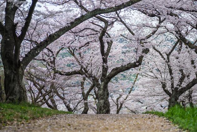 奈良 三室山