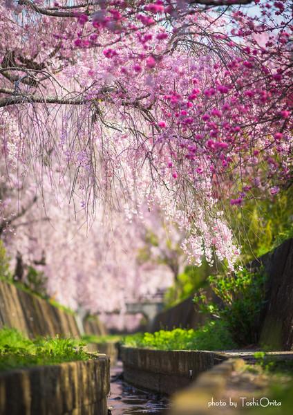 栃木県足利市本城