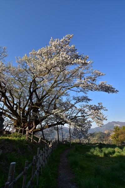 長野市素桜神社