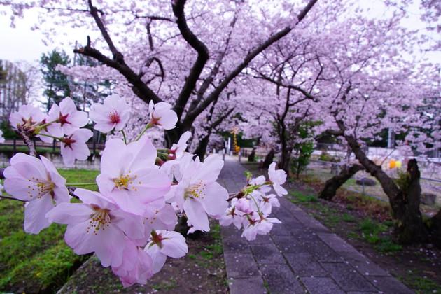 奈良市 西ノ京 薬師寺西門