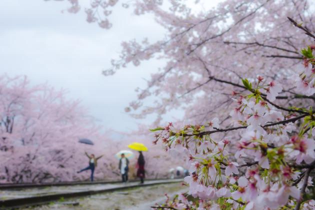京都市東山区 蹴上インクライン