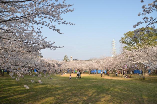 愛知県豊橋市向山公園