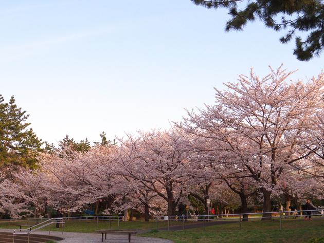辰巳の森緑道公園、東京都江東区