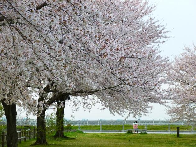 三重県九華公園