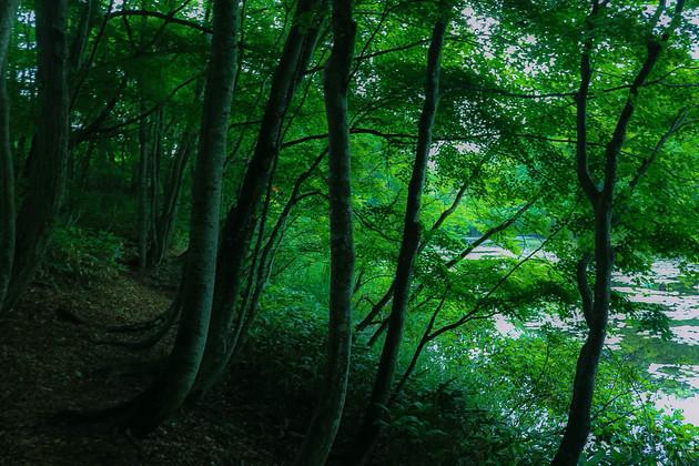 福島県昭和村