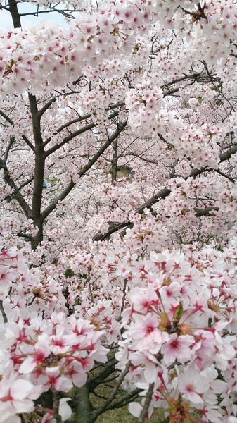 愛媛県松山市 総合公園