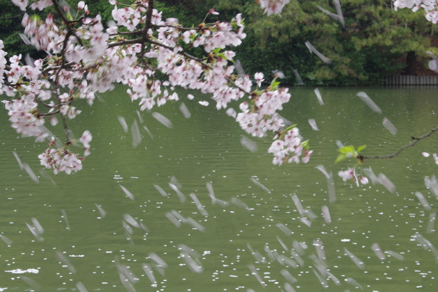 東海市 大池公園