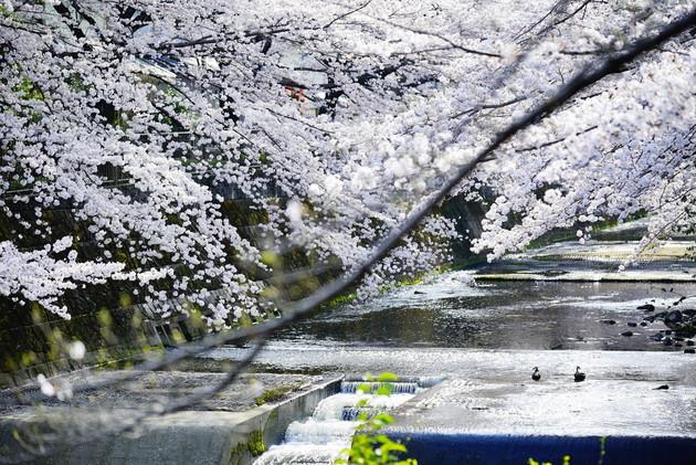 東京都町田恩田川