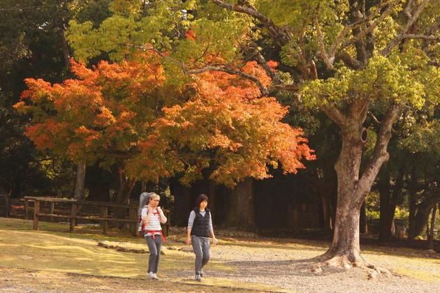 奈良公園 若草山麓
