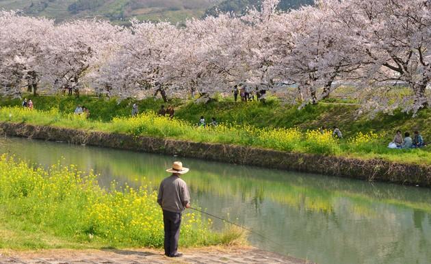 福岡県うきは市 流川桜並木