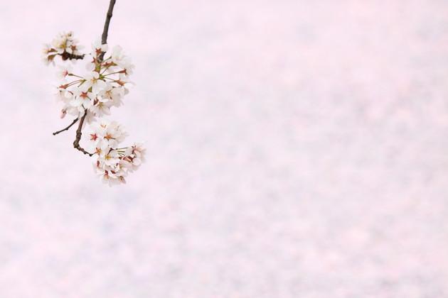 青森県弘前公園