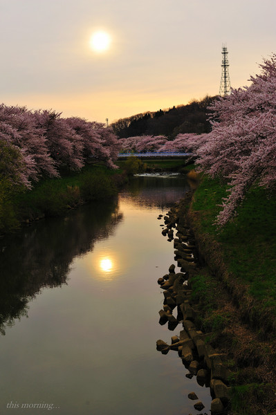 太平川沿い桜並木