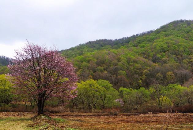 福島県、北塩原村