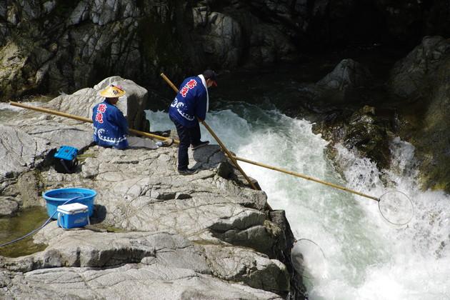 笠網漁の鮎滝