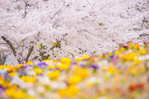シロトピア記念公園、姫路市