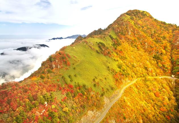 高知県いの町瓶ケ森林道