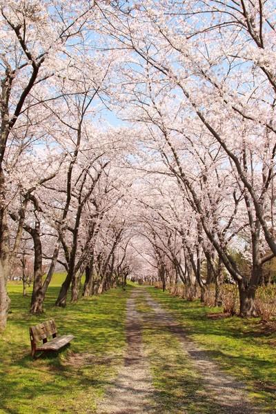 菊ヶ丘公園(五所川原市)