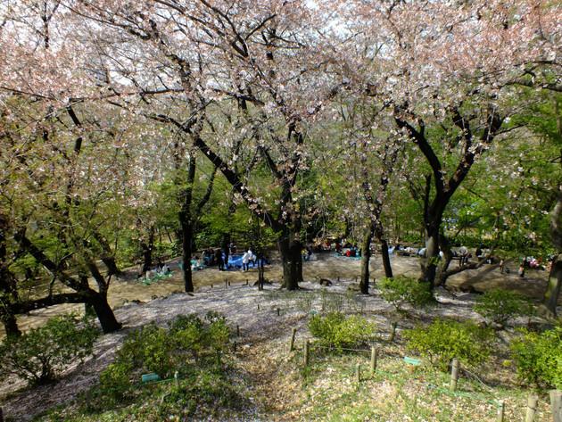 戸山公園 箱根山