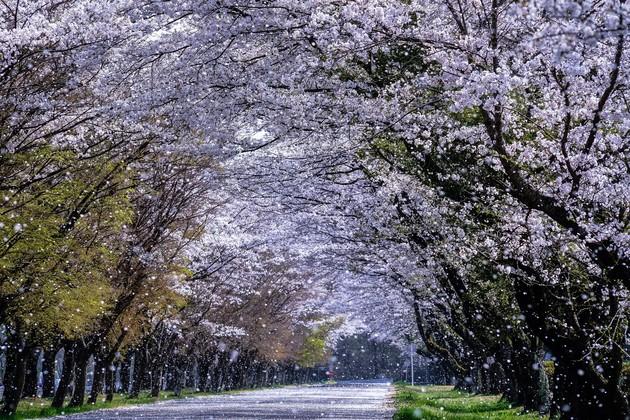 井頭公園付近、栃木県真岡市