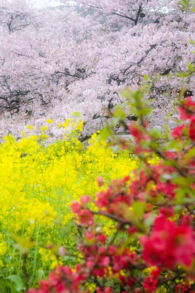 京都市山科区 疏水沿い