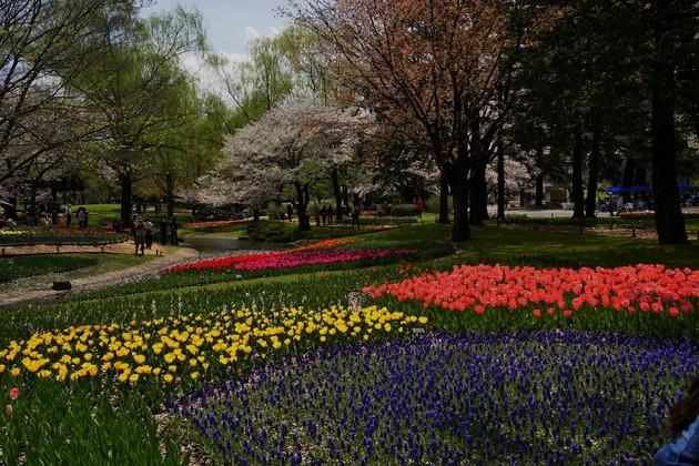 立川昭和記念公園