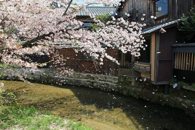 祇園白川 京都市