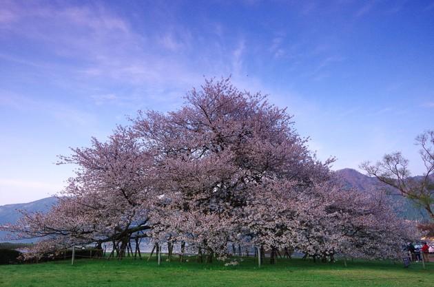 神奈川県箱根町 箱根園