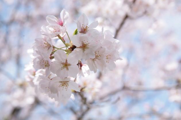高知県 香美市 鏡野公園