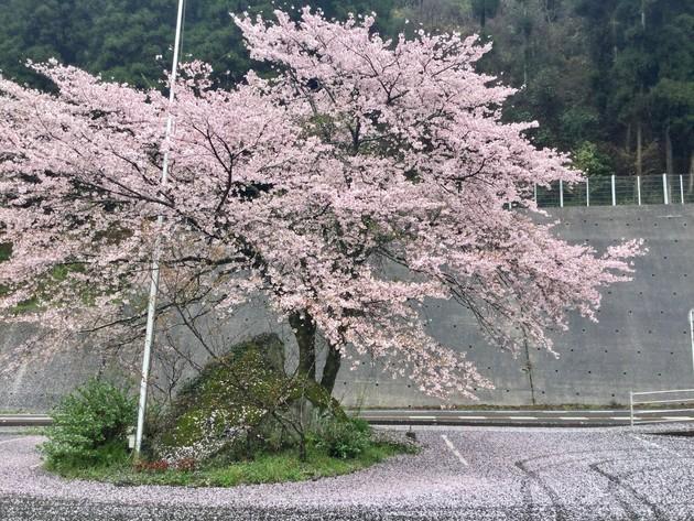 木の花ガルデン