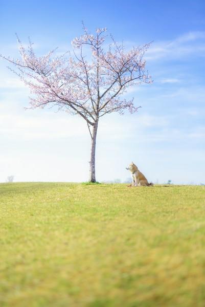 富谷市成田東公園