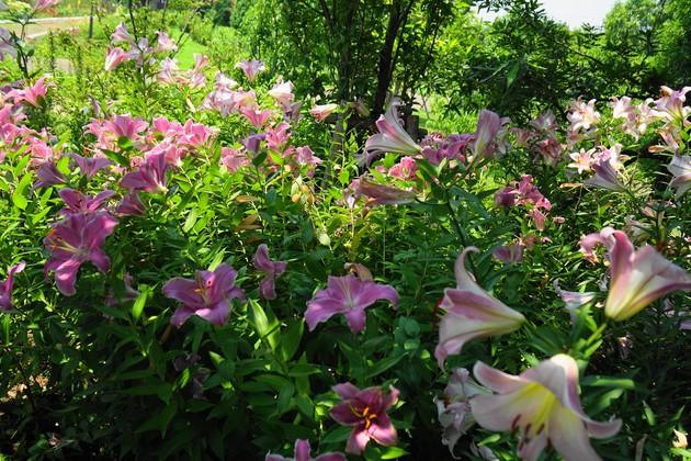 神奈川県平塚市花菜ガーデン