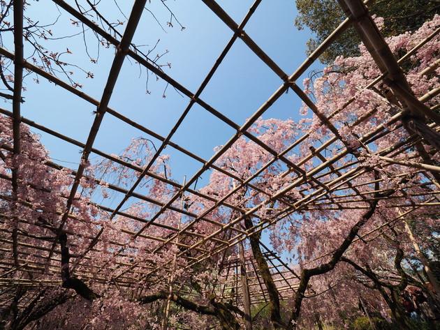 京都 平安神宮神苑