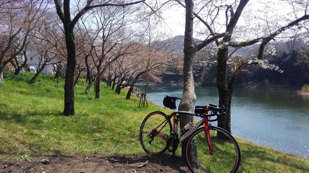 新城市 桜淵公園