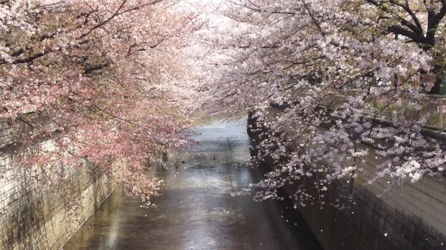 石神井川沿い