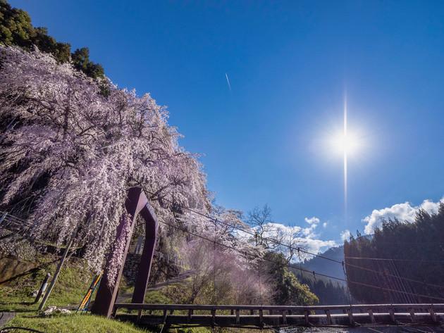 京都市右京区京北 魚ヶ渕吊り橋