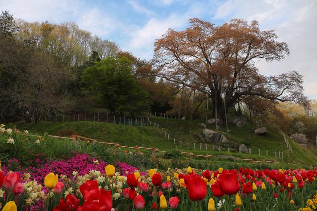 福島県、古殿町