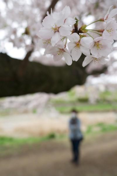 八王子市浅川沿いの散歩道