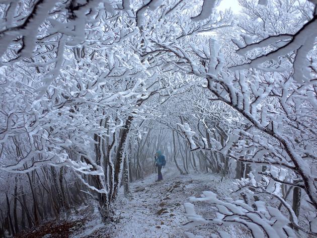 奈良県高見山