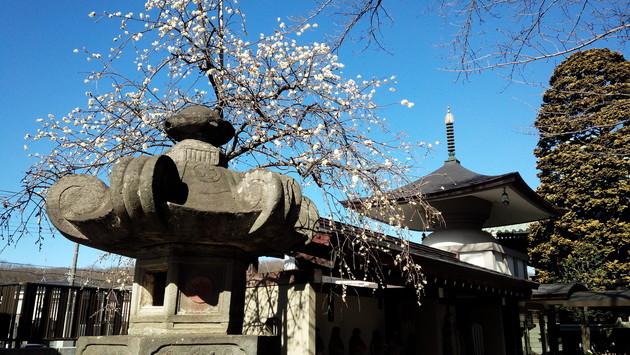東村山 徳蔵寺