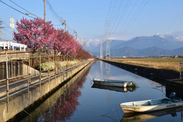 愛媛県西条市北条新田の千本桜